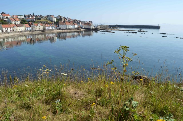 Pittenweem West Shore - July 2013