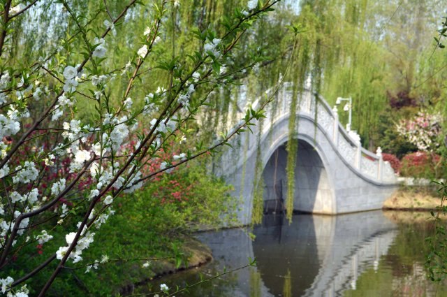 Bridge and blossom 2