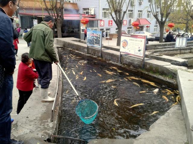 Choosing your fish