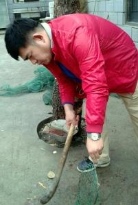 Killing the fish