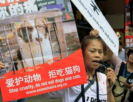Protesting against the Dog Meat Festival