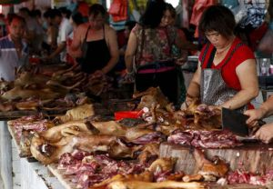 dog meat vendors yulin