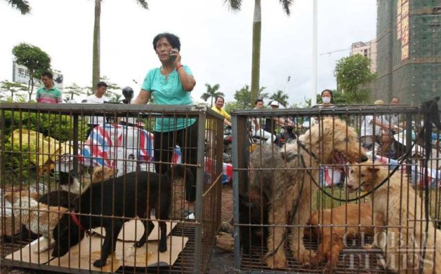Yang Xiaoyun buying up dogs to save them from being killed and eaten.